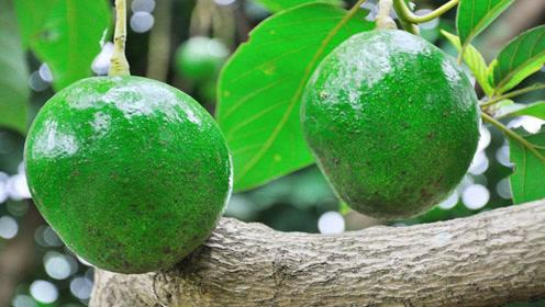 1个它等于3个蛋,这水果排毒又减肥,女性吃了还促进发育