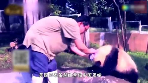 老外到底有多喜欢大熊貓!他们可以没有首相但是不能没有熊猫!