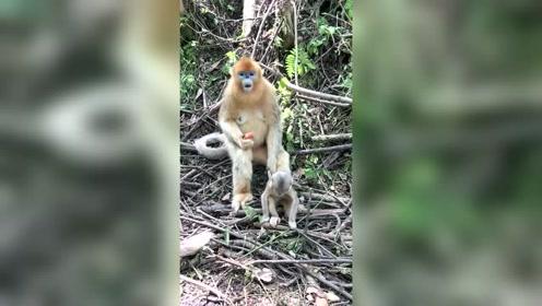 猴妈妈看管孩子的方式让人忍俊不禁!