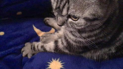 盘点猫咪的五个怪癖,你家猫咪也这样吗