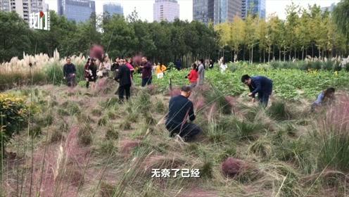 """杭州网红粉草被游客成片踩踏,园丁忍痛割掉,""""不割保不住啊"""""""