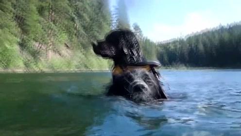 犬界也不给单身狗生存