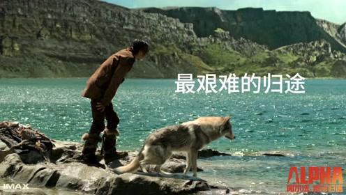 史前奇景狂野冒险!IMAX3D《阿尔法:狼伴归途》强势袭来