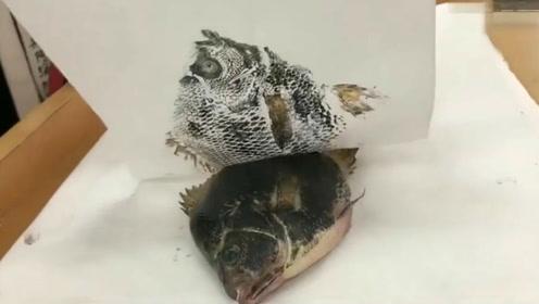 美术老师布置的画鱼作业,在座的应该没人画比我更像的吧?