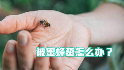 被蜜蜂蜇后该怎么办?科学家分享小妙招,学会能快速止痛!