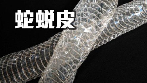 蛇为什么一年要蜕3、4次皮?网友:蜕皮过程中疼吗?听专家怎么说!