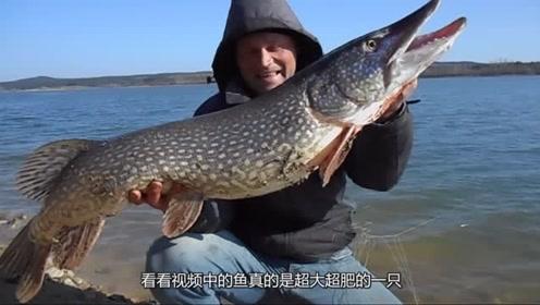 钓友只用细线就钓到巨型狗鱼,这鱼长得跟怪兽一样,外国人真大胆