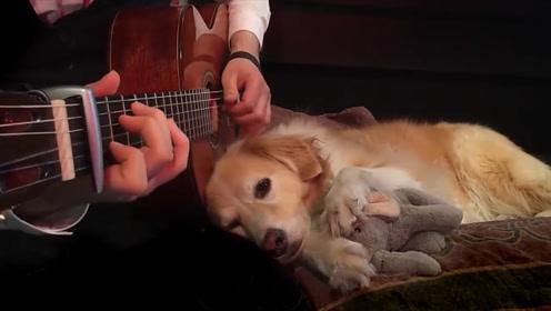 好心女警救下残疾小狗,手术后的它懂得感恩,为你点赞