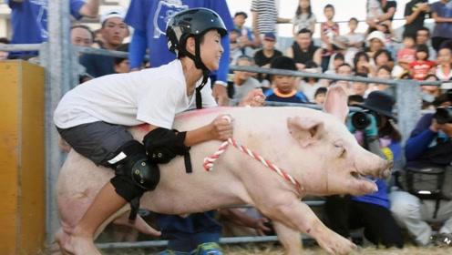 日本奇葩比赛,男女老少骑着猪狂奔