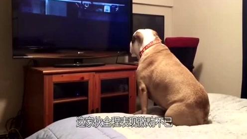 狗狗看鬼片,全程表现激动不已,据说狗狗能看到人看不到的东西!
