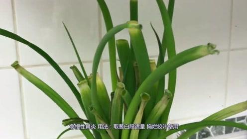 一种蔬菜6种妙用,治疗风寒感冒、胃痛反酸,效果非常好