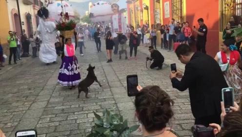特殊嘉宾开心冲入婚礼现场 旋转跳舞超抢镜
