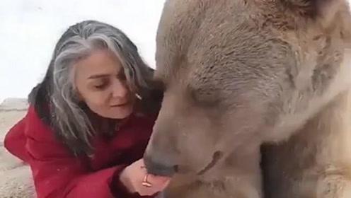 难以置信!女子淡定趴雪地上给棕熊喂食草莓
