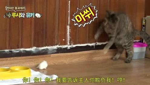 你个小笨猫,这么大的个子还被一只老鼠给熊住了!