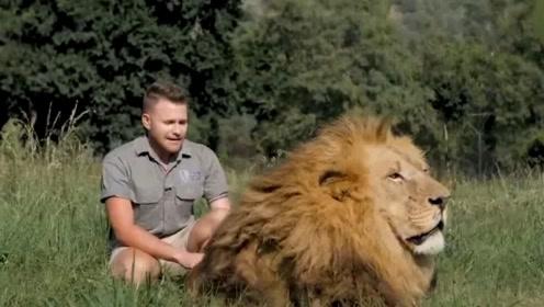 比武松还狠?大哥跟狮子是好兄弟,鬣狗求摸摸