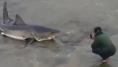 最后的结局,是鲨鱼把男子吃了,还是男子帮助鲨鱼返回了大海?