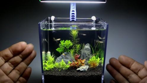 世界最小的鱼缸仅3厘米 养的鱼要拿放大镜看