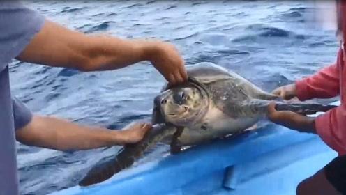 海龟跟着游船不愿离去,究其原因让人心酸!