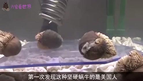 全球最强的蜗牛,外壳硬到军刀都划不破,真是长见识了
