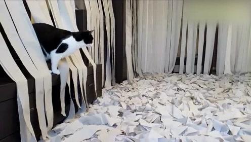铲屎官用100卷卫生纸铺满房间,接下来猫咪的反应好有趣