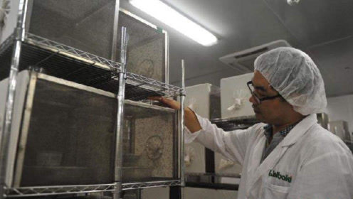 """这家工厂每年放出100万只蚊子,携带""""特殊""""病菌,大家都说好"""