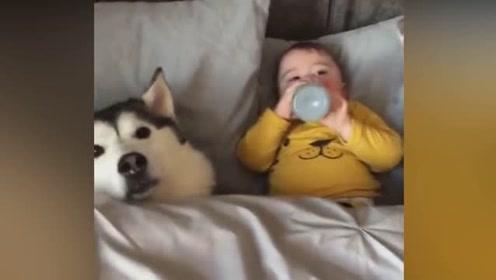 长情的陪伴!记录狗狗和新生小主人第一次相遇到一年