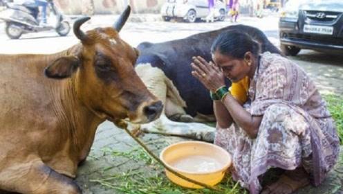 印度人不吃牛肉,猪肉,羊肉,那他们到底都吃些什么?涨知识了