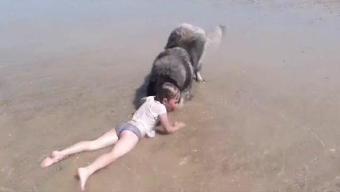 小主人海边玩水 吓得大狗不顾安危立马去营救
