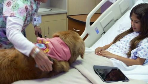 科学家让狗狗当上了治病救人的医生,事实上是怎么回事呢?