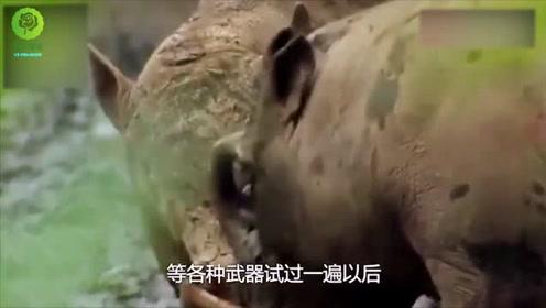 """话说""""一猪二熊三虎"""",野猪凭啥排在熊虎之前?巨型野猪可不好惹"""