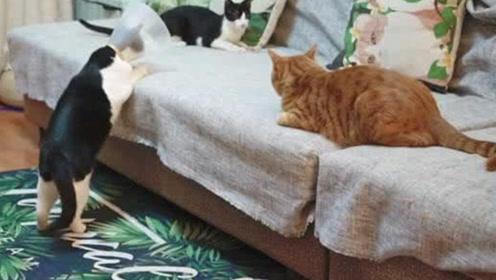 当主人收养了一只流浪猫,会怎么对待它呢?