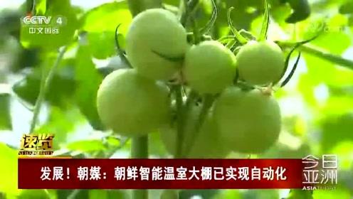 发展!朝媒:朝鲜智能温室大棚已实现自动化