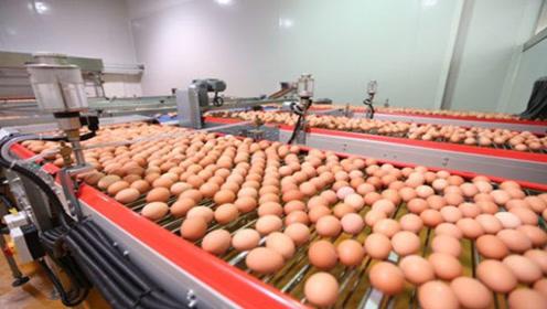 """超市里面的鸡蛋竟是""""人造蛋""""?生产过程曝光,看完你还敢吃吗?"""