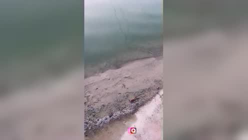 小甲鱼可遇不可求