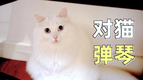 对猫弹琴,对猫唱歌,猫能听懂吗?