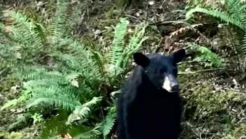 它究竟有错吗?美国一公路发现黑熊,因与人过亲被安乐死
