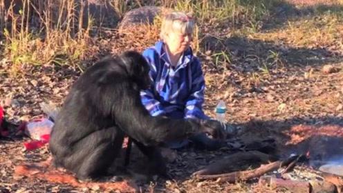 猩猩要逆天了?大猩猩做饭20多年,真想尝尝它做的饭