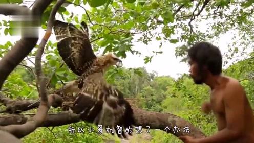 """""""野人""""爬上树偷蛋,不料老鹰在家,接下来的一幕真是惊险"""