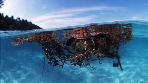 世界上最危险的海域,清澈无比水下可见度70米,却让无数人丧命