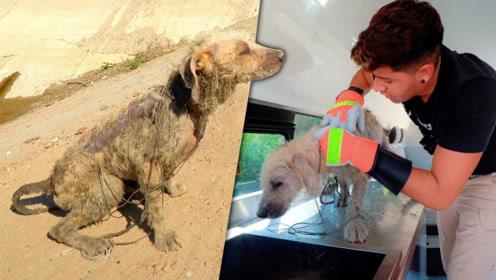 可怜的爱犬失而复得,小伙却高兴不起来,结果令人难以接受!