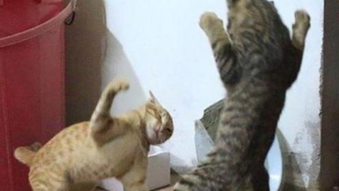 狸花猫跟媳妇儿干起仗来,谁也不让着谁,有本事决战到天亮