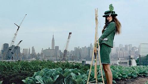 纽约模特屋顶种菜,青年农民拍田园风Vlog为何有千万人关注?