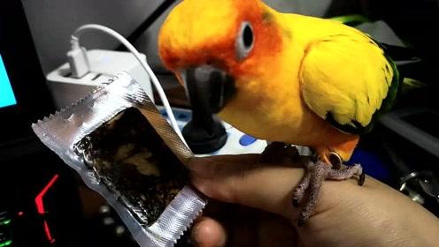 鹦鹉还对阿胶感兴趣吗?这两只鹦鹉,为了能吃到阿胶使尽浑身解数