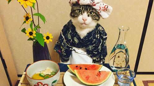 日本猫咪热衷cos各种角色 美食当前坐怀不乱