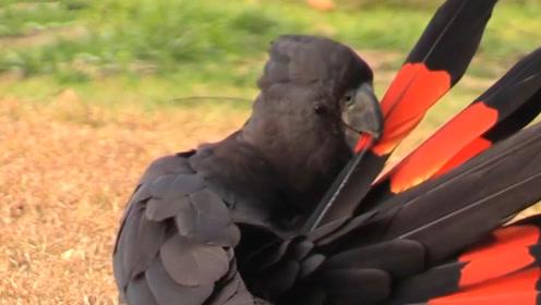 美翻了!最特别的几种鹦鹉,想必你从没见过!