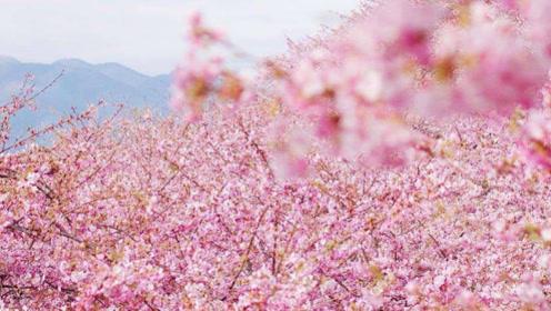 互旺财运的生肖夫妻,桃花降临是正缘分,永结同心!