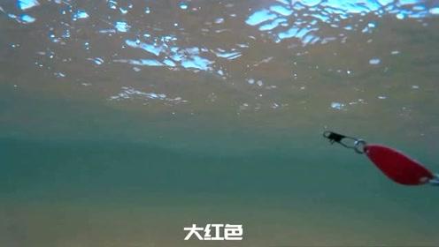 水下摄影:不同颜色的马口亮片泳姿及反光效果展示