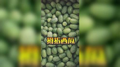 你见过比拇指还小的西瓜吗?