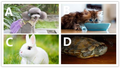 心理测试:如果可以养宠物,你会选哪个?测你会不会孤独