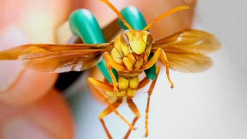最令人恐惧的带刺动物Top10,真正让你知道什么是痛!